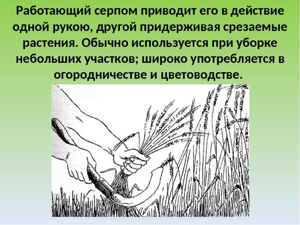 Работающий серпом приводит его в действие одной рукою, другой придерживая сре...