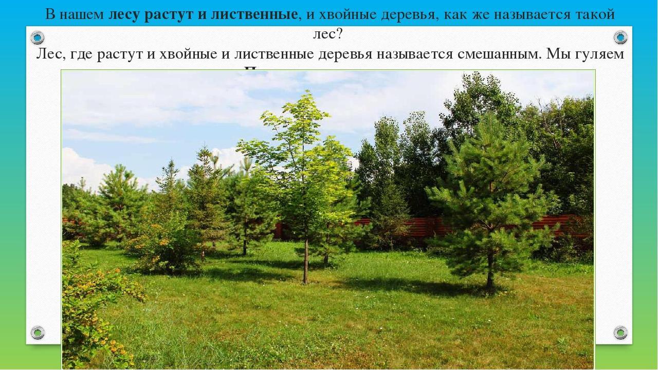 В нашемлесу растут и лиственные, и хвойные деревья, как же называется такой...