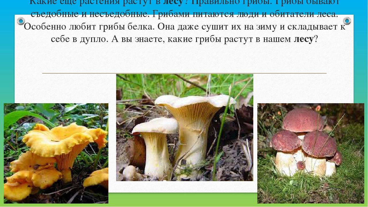 Какие ещё растения растут влесу? Правильно грибы. Грибы бывают съедобные и н...