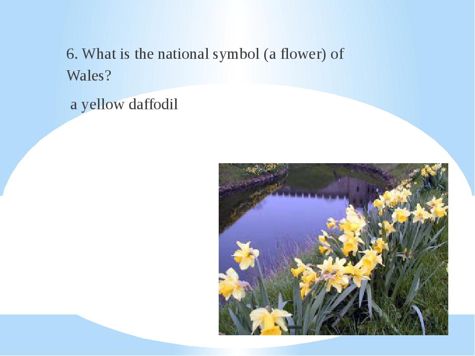 6. What is the national symbol (a flower) of Wales? a yellow daffodil