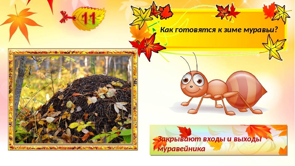 Закрывают входы и выходы муравейника Как готовятся к зиме муравьи?