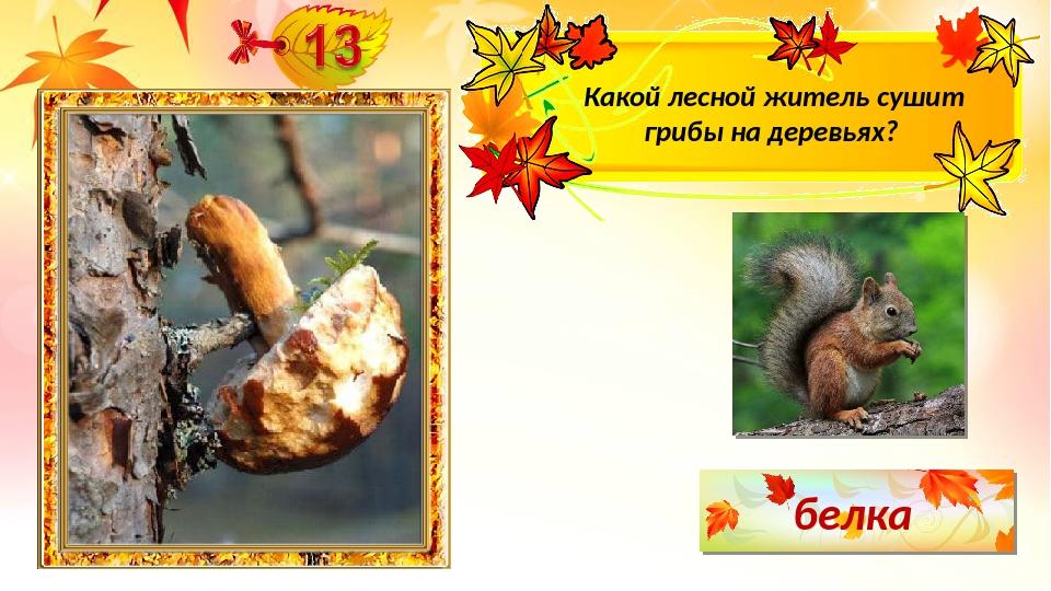 белка Какой лесной житель сушит грибы на деревьях?
