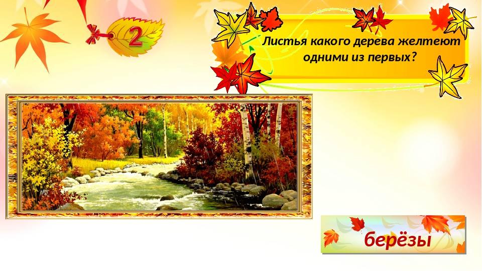 берёзы Листья какого дерева желтеют одними из первых?