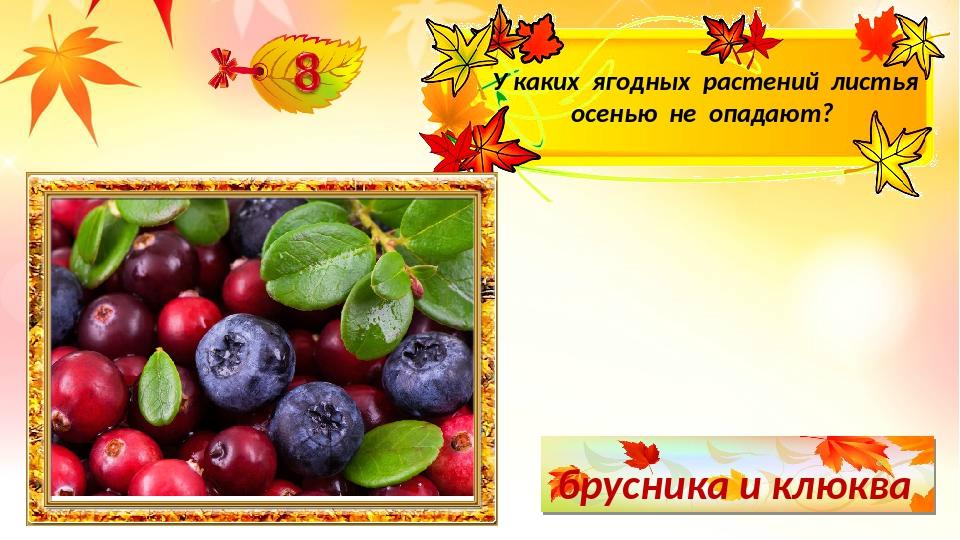 брусника и клюква У каких ягодных растений листья осенью не опадают?
