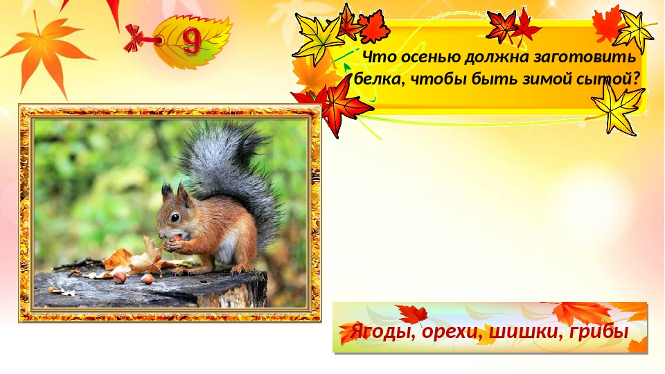 Ягоды, орехи, шишки, грибы Что осенью должна заготовить белка, чтобы быть зим...