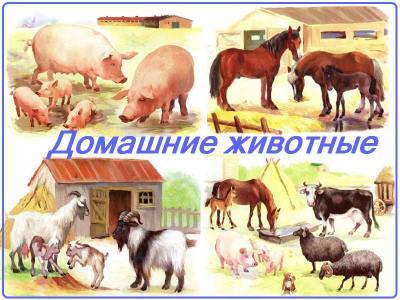 Упражнения на тему домашние животные thumbnail
