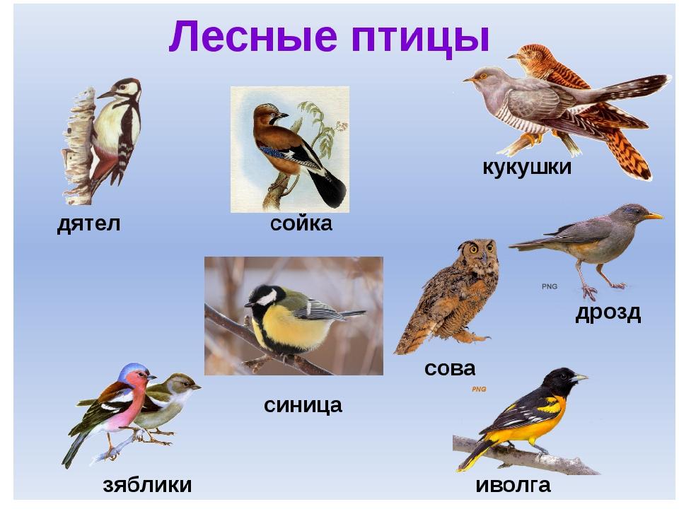 картинки всех птиц и их названия в россии