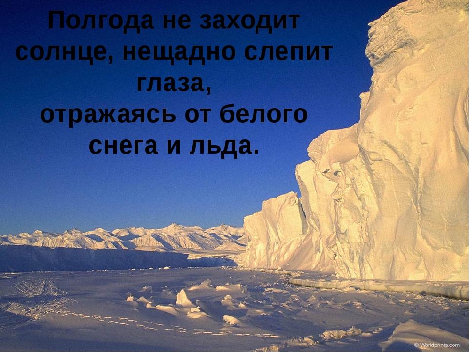 Полгода не заходит солнце, нещадно слепит глаза, отражаясь от белого снега и...