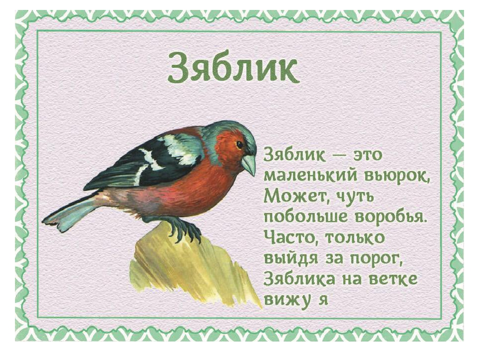 Стихи от имени птиц для детей
