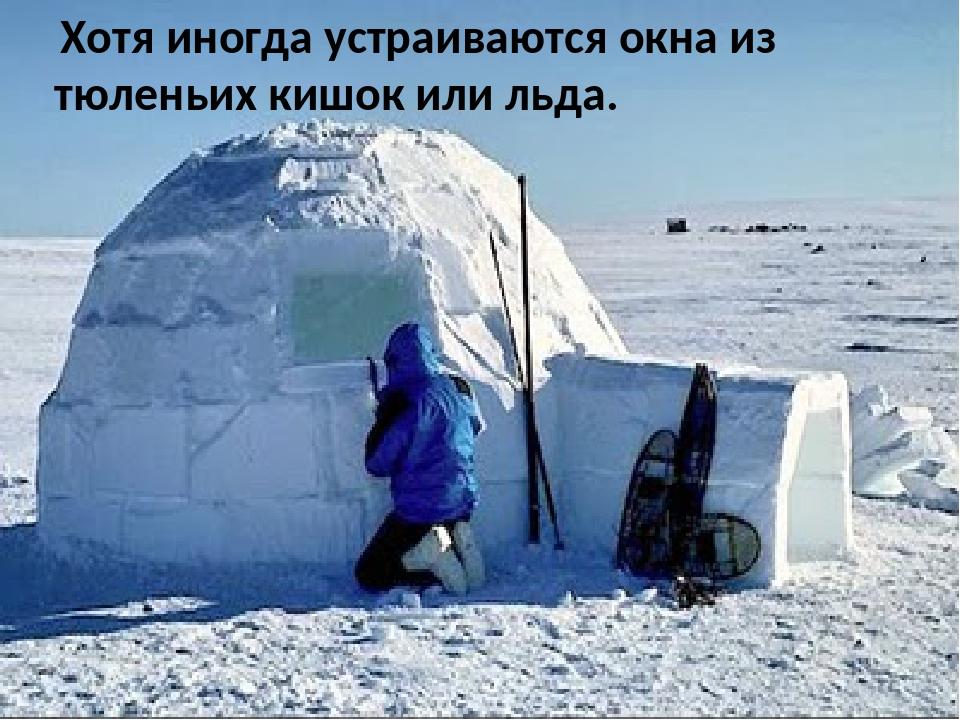 Хотя иногда устраиваются окна из тюленьих кишок или льда.