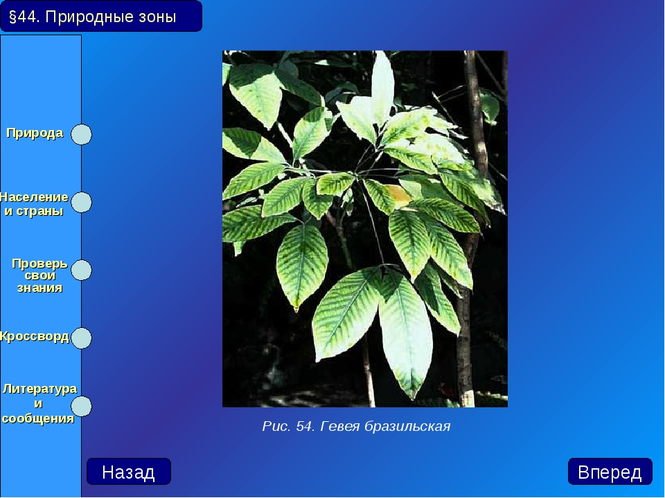 §44. Природные зоны Назад Вперед Рис. 54. Гевея бразильская Природа Населени...