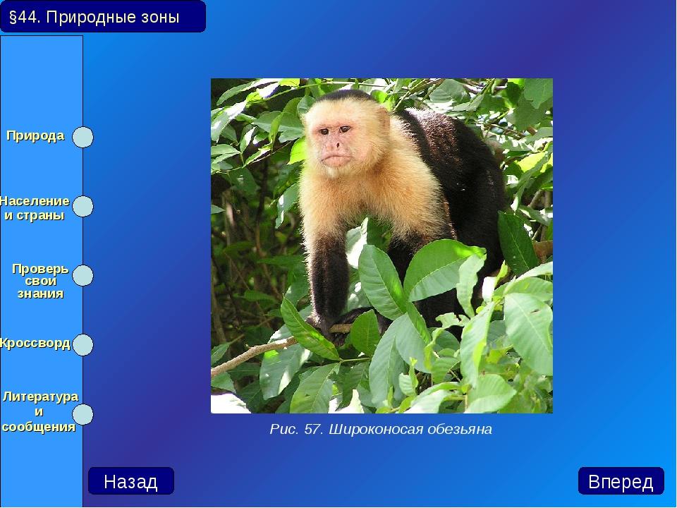 §44. Природные зоны Назад Вперед Рис. 57. Широконосая обезьяна Природа Насел...