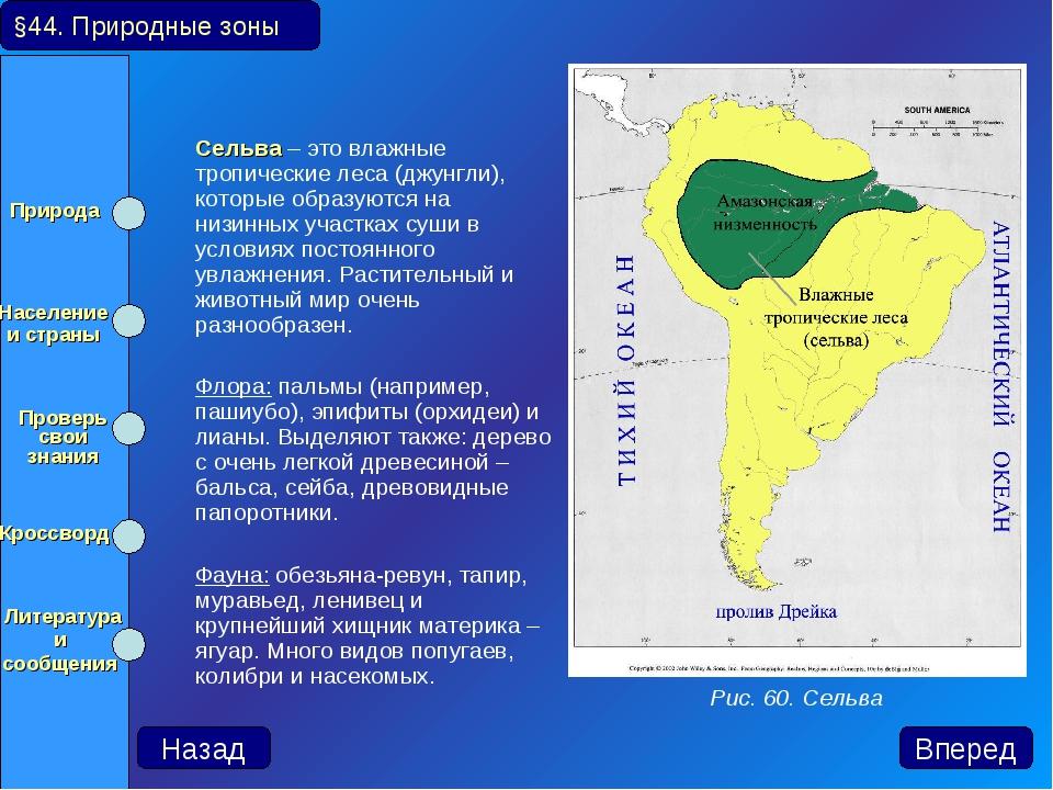 Сельва – это влажные тропические леса (джунгли), которые образуются на низин...