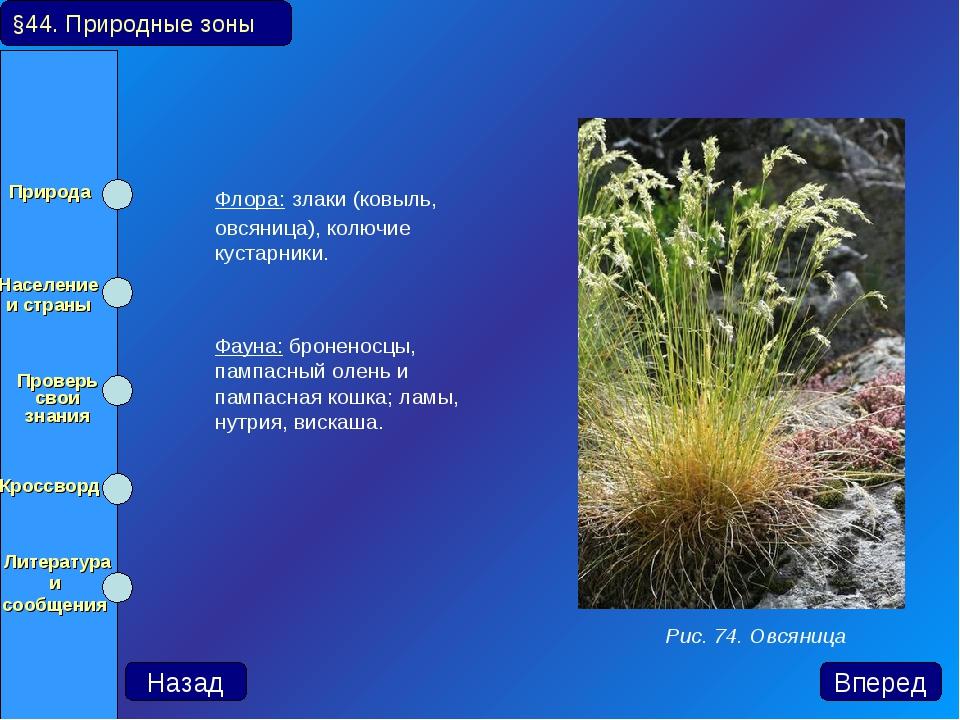 Флора: злаки (ковыль, овсяница), колючие кустарники. Фауна: броненосцы, пам...