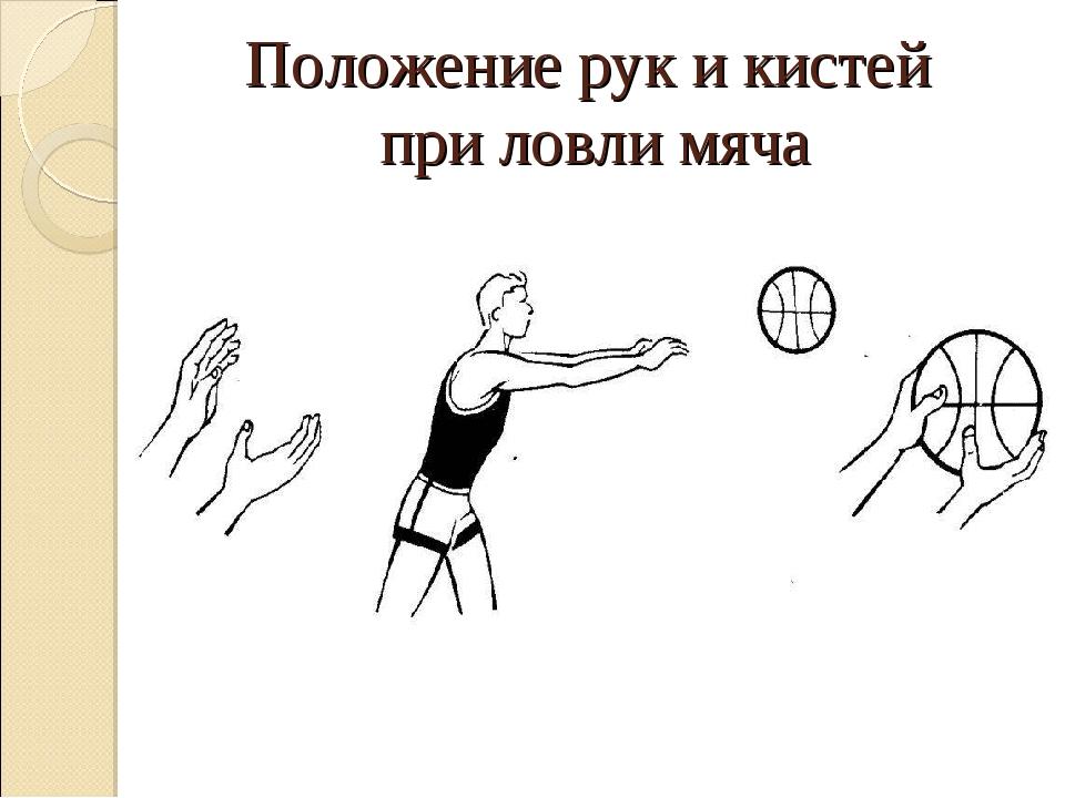 Положение рук и кистей при ловли мяча
