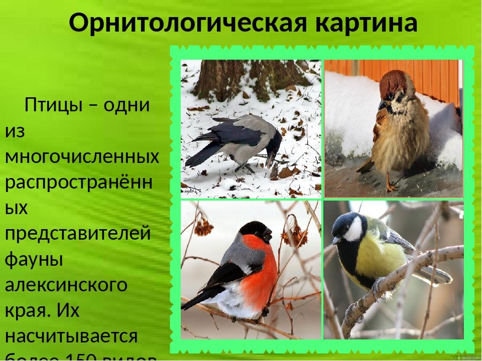Орнитологическая картина Птицы – одни из многочисленных распространённых пред...