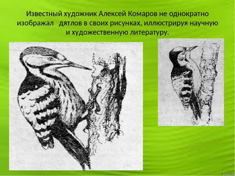 Известный художник Алексей Комаров не однократно изображал дятлов в своих рис...