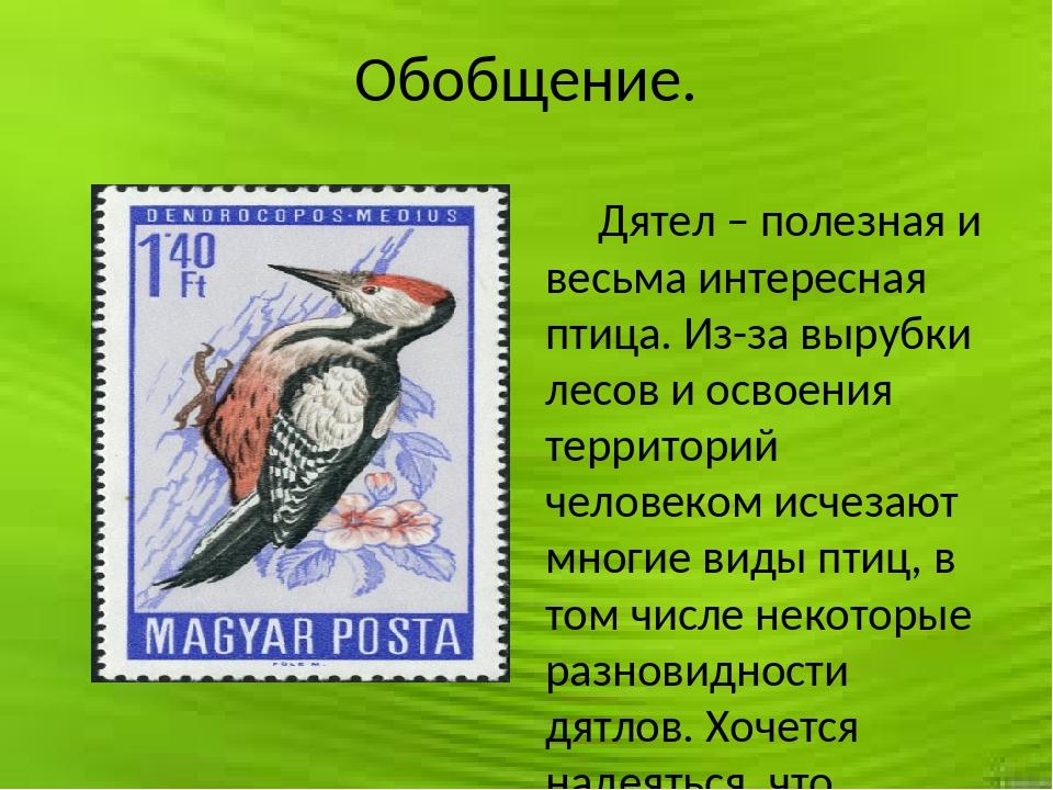 Обобщение. Дятел – полезная и весьма интересная птица. Из-за вырубки лесов и...