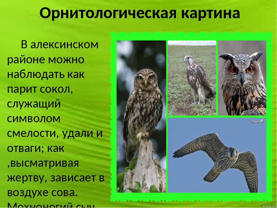 Орнитологическая картина В алексинском районе можно наблюдать как парит сокол...