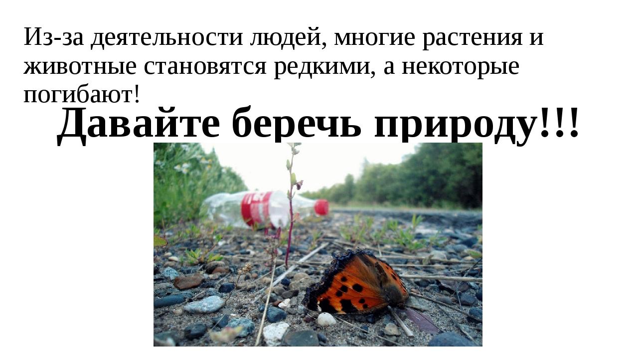 Из-за деятельности людей, многие растения и животные становятся редкими, а не...