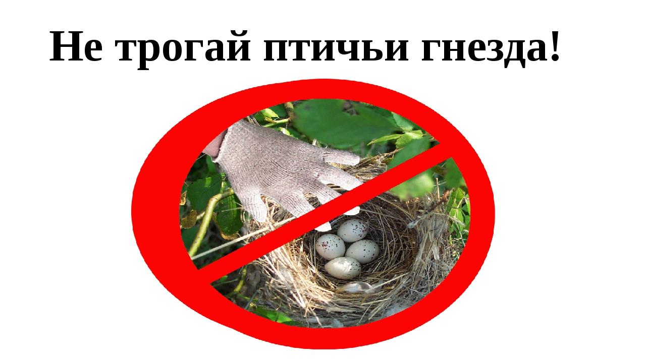 Не трогай птичьи гнезда!