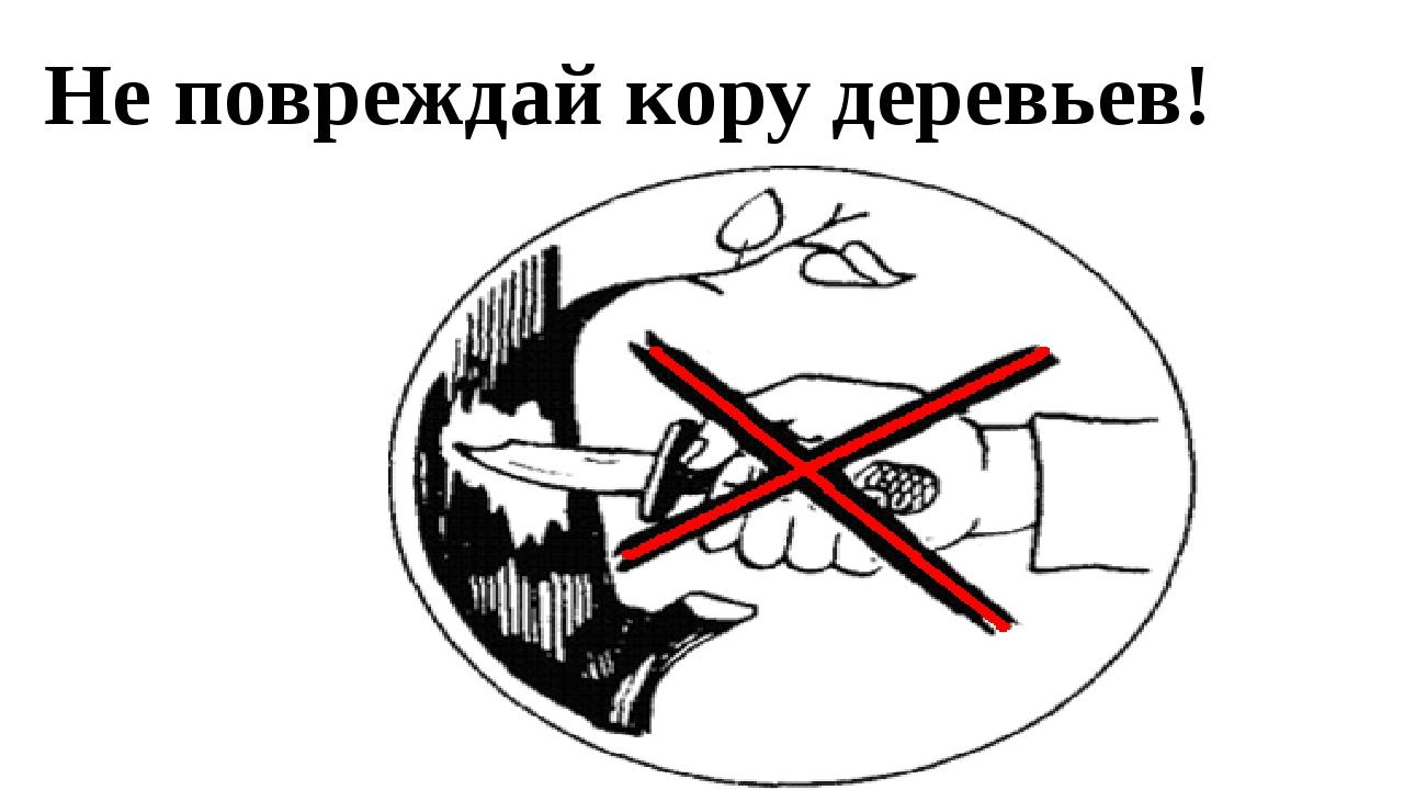 Не повреждай кору деревьев!