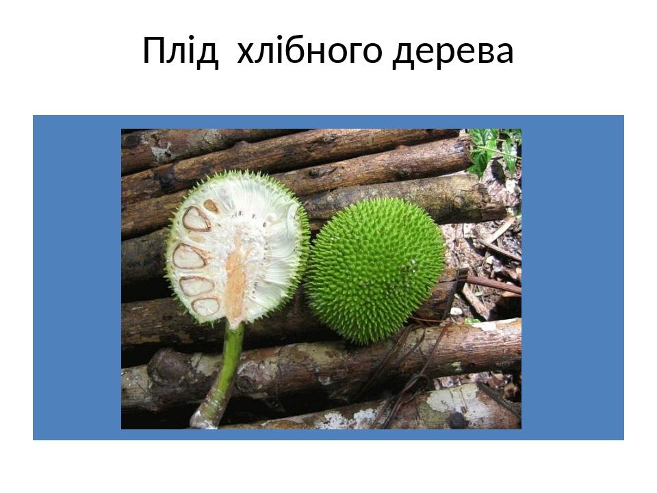 Плід хлібного дерева