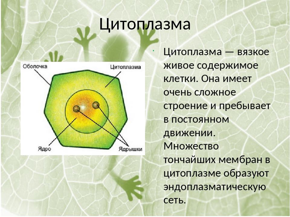 картинки цитоплазма клетки самая вкусная родниковая