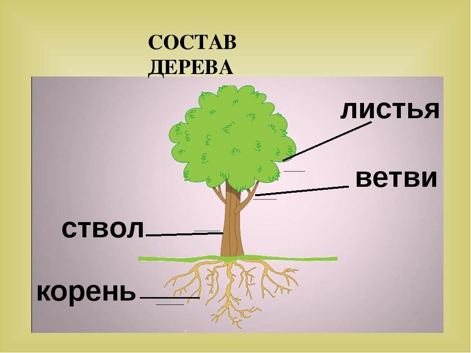 части дерева в картинках вообще понимаю