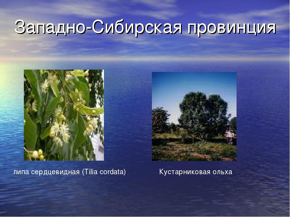 Западно-Сибирская провинция липа сердцевидная (Tilia cordata) Кустарниковая о...