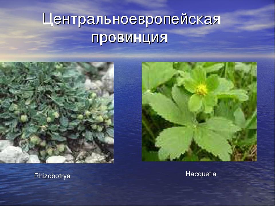 Центральноевропейская провинция Rhizobotrya Hacquetia