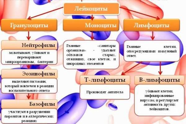 hello_html_m55065077.jpg