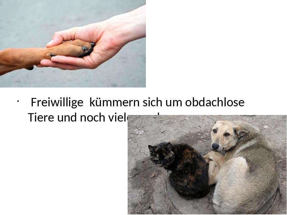 Freiwillige kümmern sich um obdachlose Tiere und noch vieles mehr.