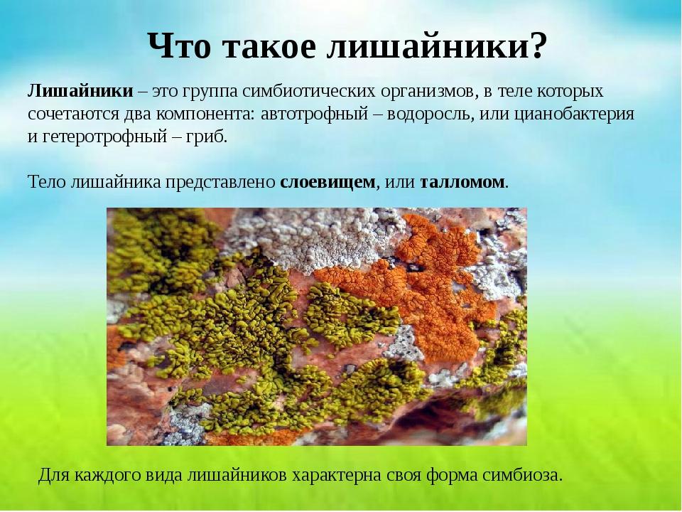 Что такое лишайники? Лишайники – это группа симбиотических организмов, в теле...