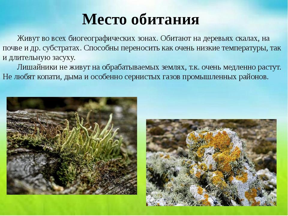Место обитания Живут во всех биогеографических зонах. Обитают на деревьях ск...