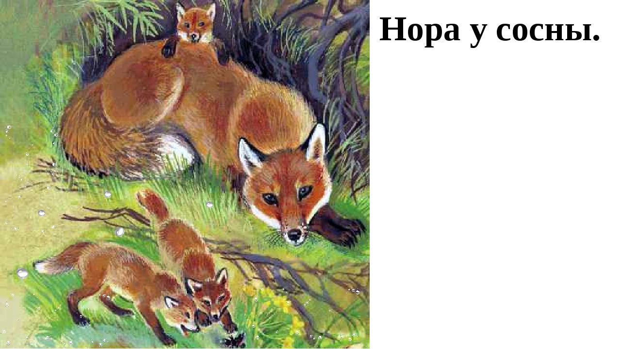 Картинки для детей лиса и лисенок