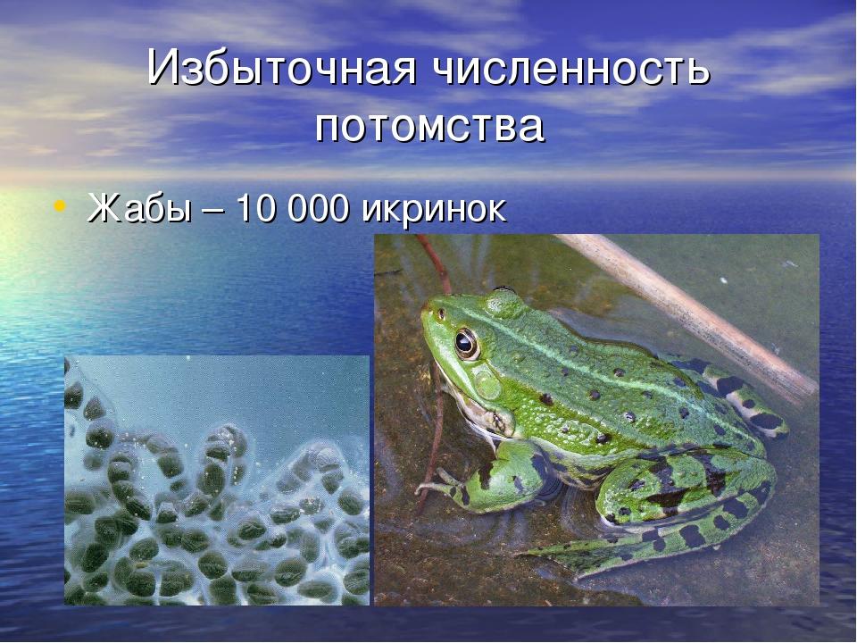 Избыточная численность потомства Жабы – 10 000 икринок