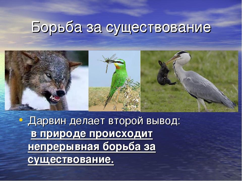 Борьба за существование Дарвин делает второй вывод: в природе происходит непр...
