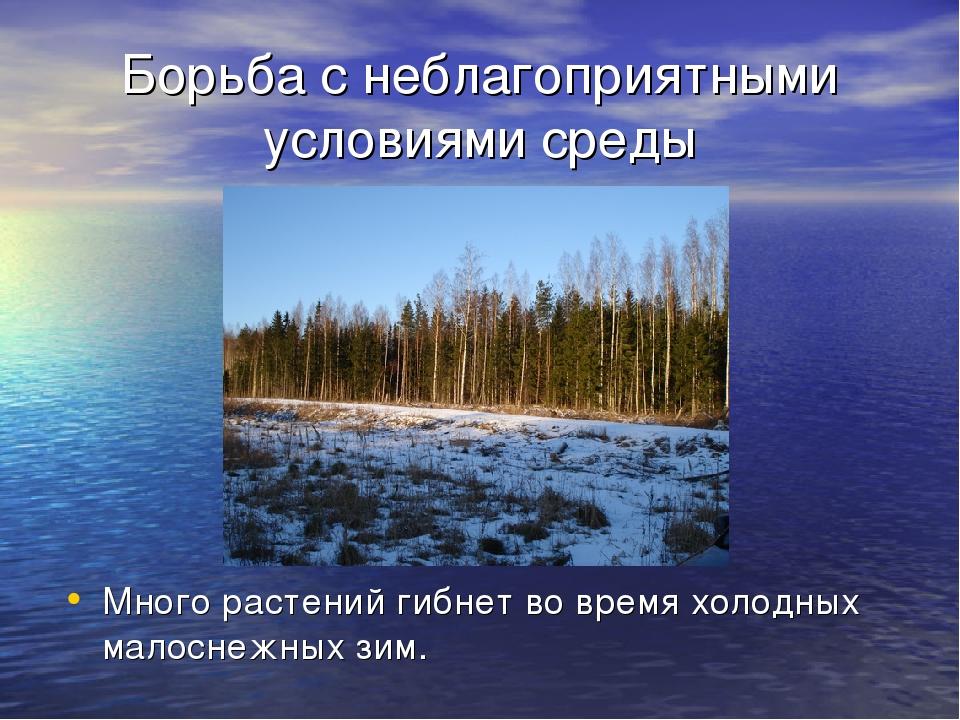 Борьба с неблагоприятными условиями среды Много растений гибнет во время холо...