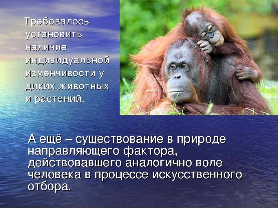 Требовалось установить наличие индивидуальной изменчивости у диких животных...