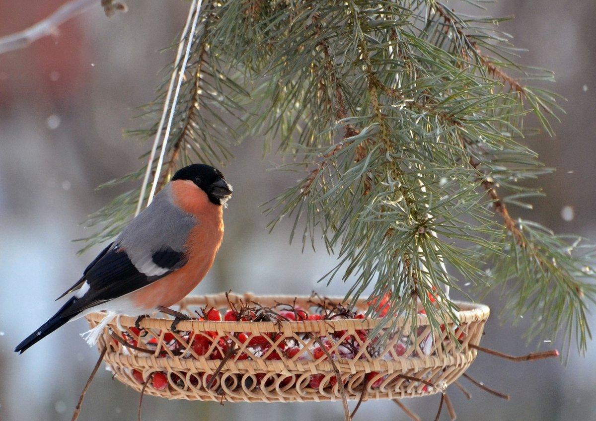 виноградной лозы, фото новогодняя елка с птичками первый универмаг