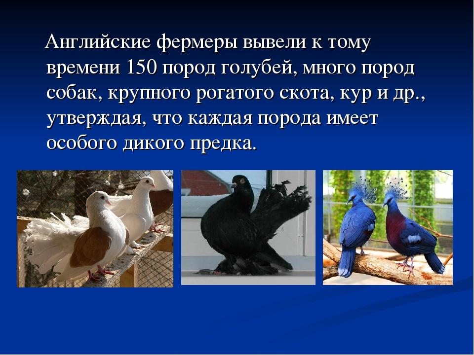 Английские фермеры вывели к тому времени 150 пород голубей, много пород соба...