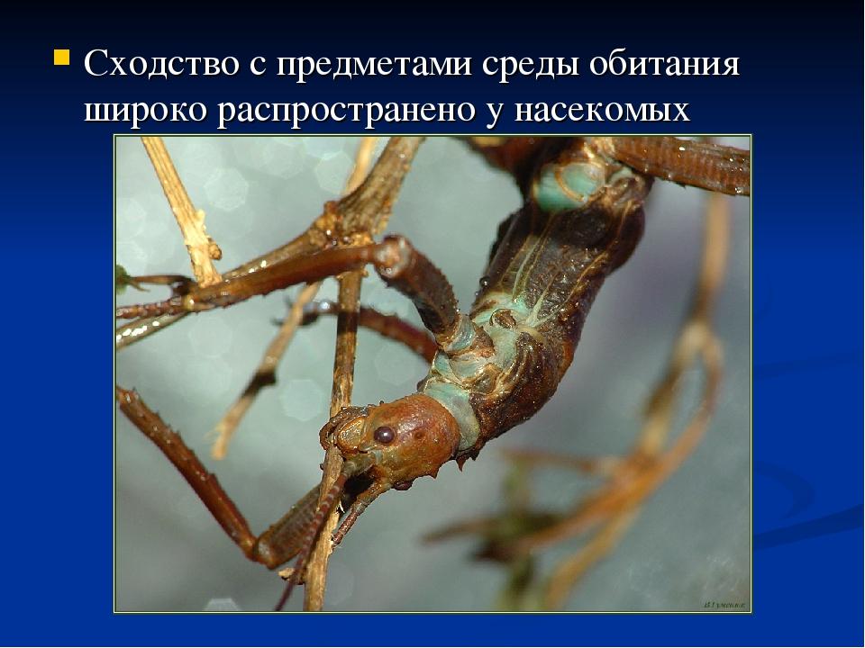 Сходство с предметами среды обитания широко распространено у насекомых