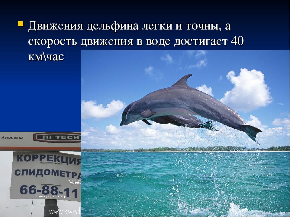 Движения дельфина легки и точны, а скорость движения в воде достигает 40 км\час