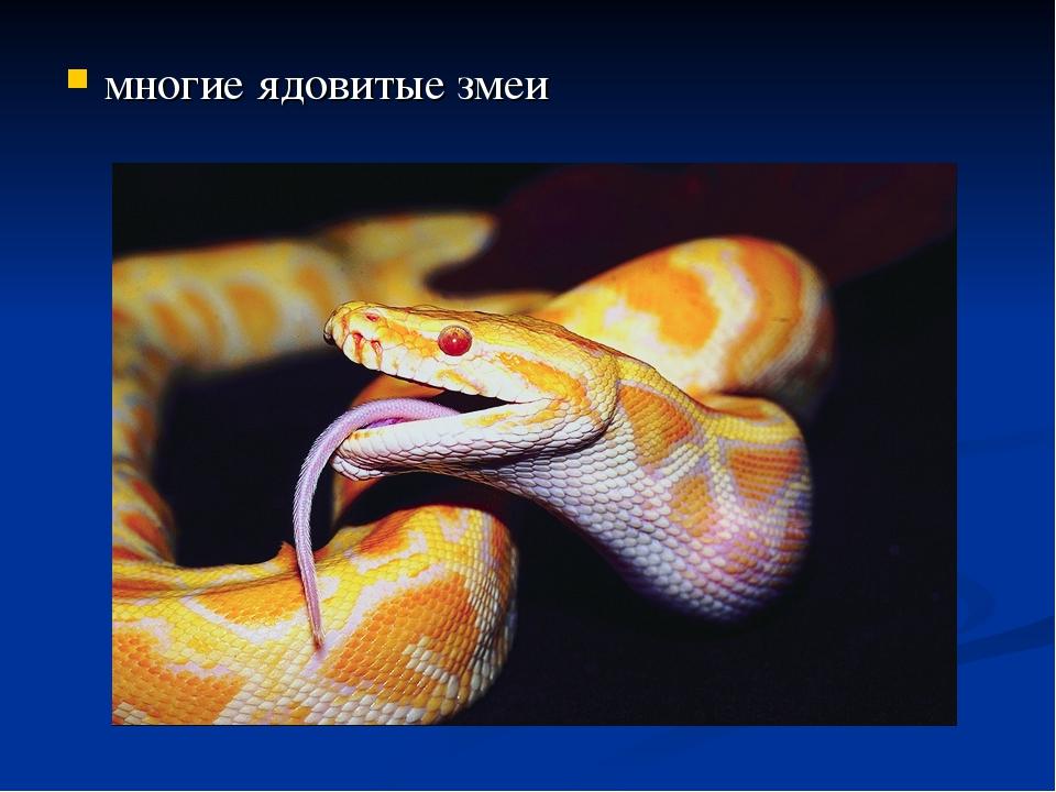 многие ядовитые змеи