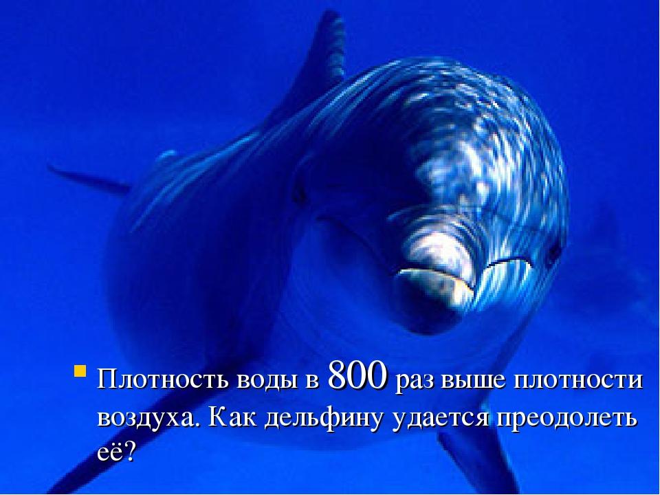 Плотность воды в 800 раз выше плотности воздуха. Как дельфину удается преодол...