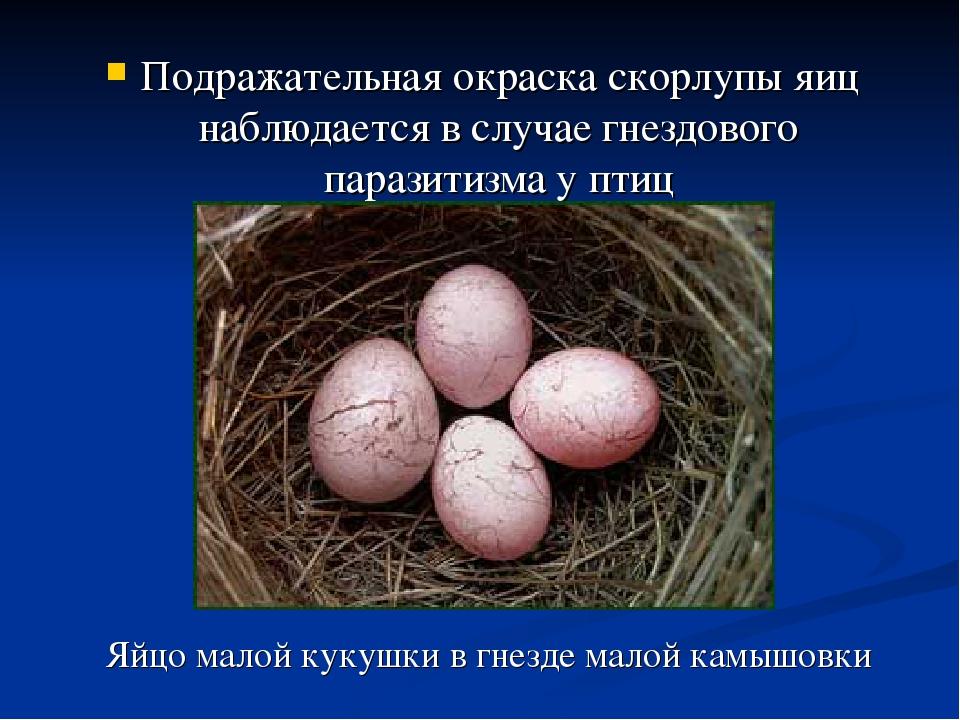 Подражательная окраска скорлупы яиц наблюдается в случае гнездового паразитиз...