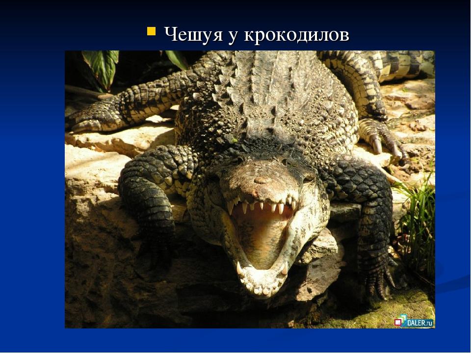 Чешуя у крокодилов