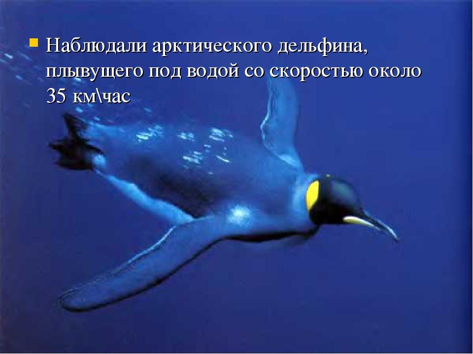 Наблюдали арктического дельфина, плывущего под водой со скоростью около 35 км...