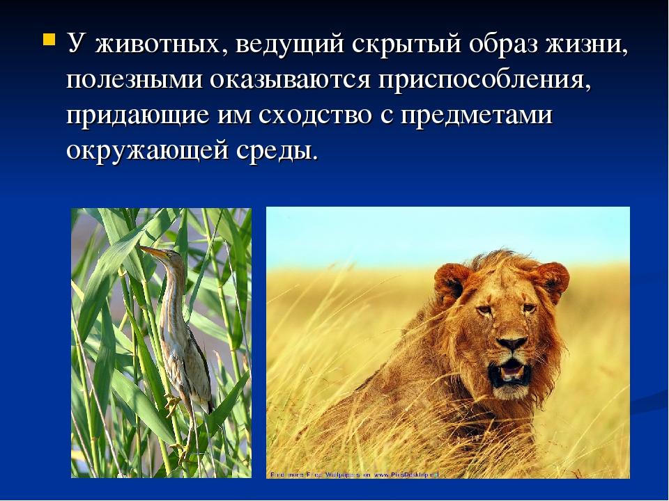 У животных, ведущий скрытый образ жизни, полезными оказываются приспособления...